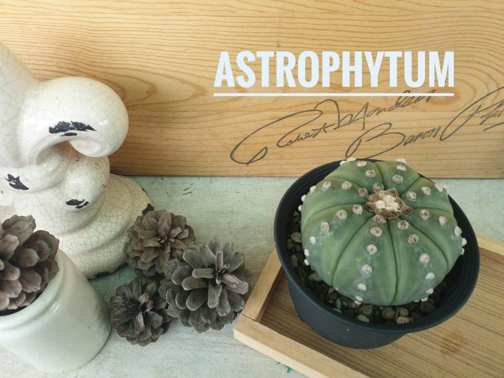 รู้จัก Astrophytum