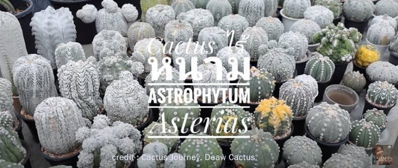 Astropyhtum คืออะไร